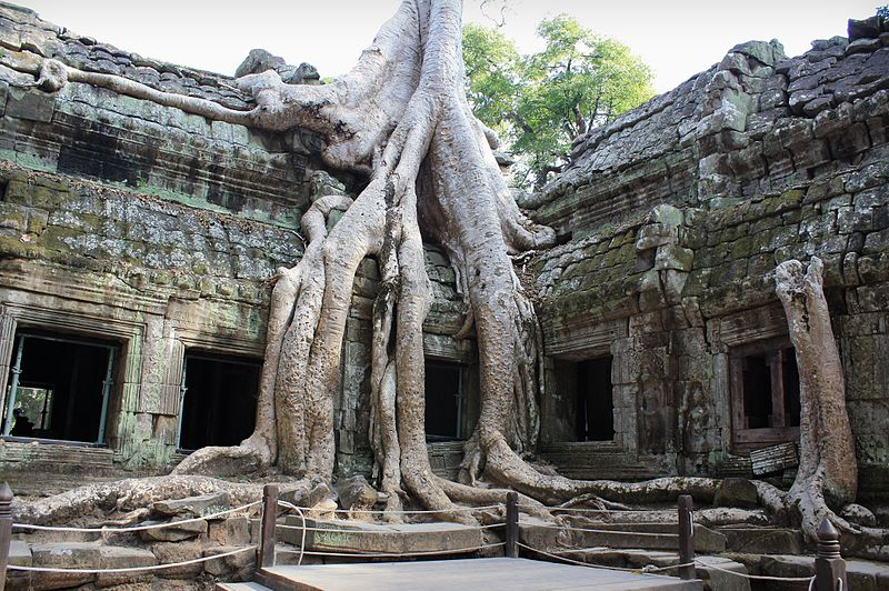 Ta Prohm is a temple in the Angkor complex built in the late 12th century by King Jayavarman VII. Large tree roots now cover much of this amazing jungle temple..