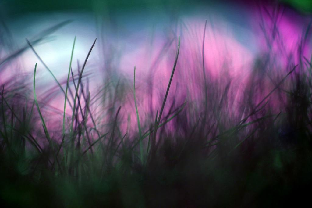 Selective focus photography of green grass with purplish colors in the background