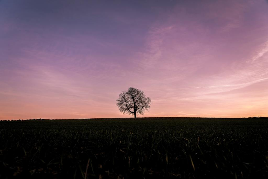 Grey tree under purple clouds